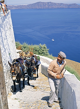 Animal transport, Santorini (Thira), Cyclades Islands, Greek Islands, Greece, Europe