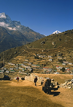 Yak used for transporting goods leaving the village of Namche Bazaar in the Khumbu Region of the Himalaya mountains in Nepal, Asia