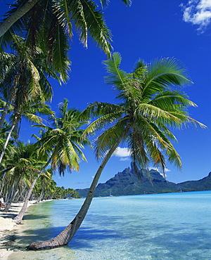 Palm trees fringe the tropical beach and sea on Bora Bora (Borabora), Tahiti, Society Islands, French Polynesia, Pacific Islands, Pacific