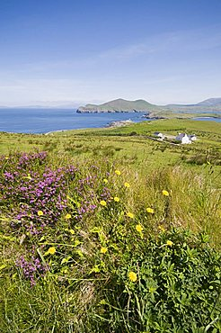 Valentia Island, Ring of Kerry, County Kerry, Munster, Republic of Ireland, Europe
