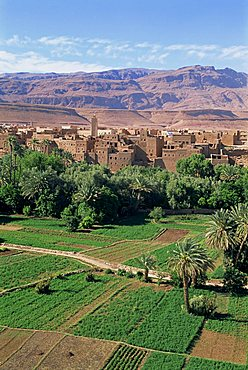 Aerial view over fields, trees and palmeries on the way to the Todra Gorge, Tinerhir, Morocco, North Africa, Africa