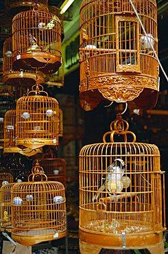 The Bird Market, Hong Lok Street, Mongkok, Kowloon, Hong Kong, China