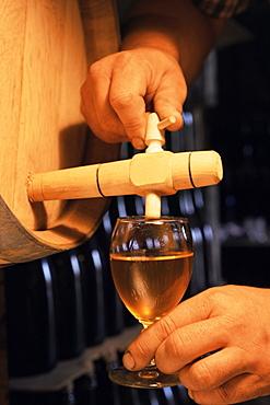Tasting cider, cider farm, Normandy, France, Europe