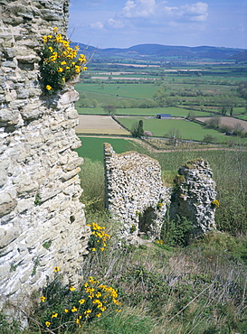 View from the keep, with wallflowers, Wigmore Castle, managed by English Heritage, Herefordshire, England, United Kingdom, Europe