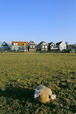Little farm houses and sheep, Marken, The Netherlands (Holland), Europe