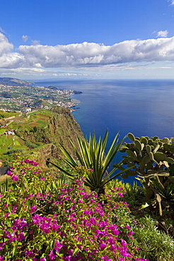 Looking towards Funchal from Cabo Girao, 580m, one of the world's highest sea cliffs on the south coast of the island of Madeira, Portugal, Atlantic, Europe