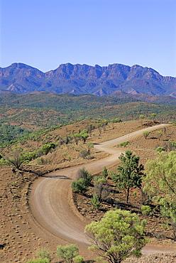 Umbrella wattles, Bunyeroo Valley, Flinders Range, South Australia, Australia