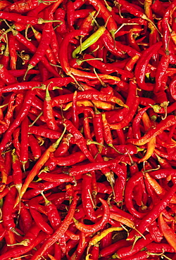 Red chilli peppers, Rajasthan, India