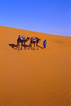 Camel train through desert, Morocco, North Africa