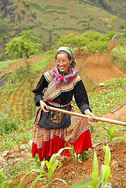 Flower Hmong ethnic woman working in the fields, Bac Ha area, Vietnam, Indochina, Southeast Asia, Asia