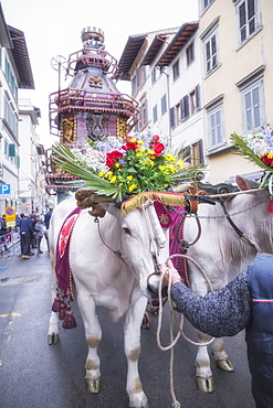 An ornate Ox cart for the Explosion of the Cart festival (Scoppio del Carro ) where on Easter Sunday a cart of pyrotechnics is lit, Florence, Tuscany, Italy, Europe