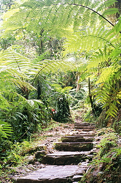 Les chutes de Carbert, Basse-Terre region, Guadeloupe, French Antilles, West Indies, Central America