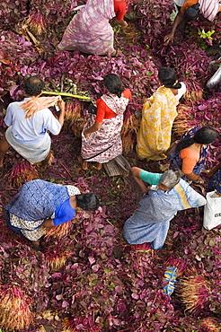 Women in Market, Kerala, India