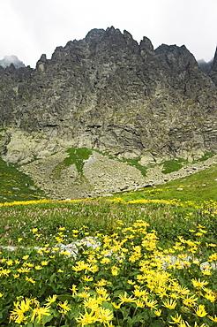 Mountain scenery and summer flowers in hiking area, High Tatras Mountains (Vyoske Tatry), Tatra National Park, Slovakia, Europe