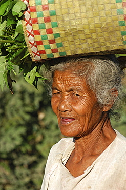 Old woman with basket of vegetables on head, Inle Lake, Shan State, Myanmar (Burma), Asia