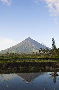 Mount Mayon, 2462 m, near-perfect volcano cone with plume of smoke reflected in rice field, Bicol Province, southeast Luzon, Philippines, Southeast Asia, Asia
