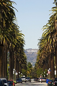 Hollywood Hills and The Hollywood sign from a tree lined Beverly Hills Boulevard, Los Angeles, California, United States of America, North America
