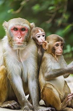 Monkey Island research park, Hainan Province, China, Asia