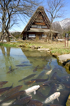 Koi carp, reflection of gasshou zukuri thatched roof houses, Shirokawago, Ogimachi, Gifu prefecture, Honshu island, Japan, Asia