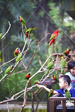 Boy feeding parakeets in World of Parrots, KL Bird Park, Kuala Lumpur, Malaysia, Southeast Asia, Asia