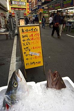 Fish restaurant, Shinjuku, Tokyo, Honshu, Japan, Asia