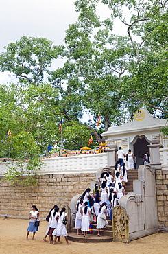 Buddhist pilgrims, Sri Maha Bodhi, sacred bodhi tree planted in 249 BC, UNESCO World Heritage Site, Anuradhapura, North Central Province, Sri Lanka, Asia
