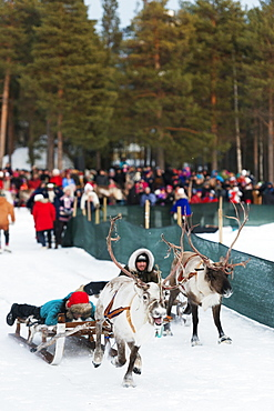Sami people at winter festival, reindeer race, Jokkmokk, Lapland, Arctic Circle, Sweden, Scandinavia, Europe