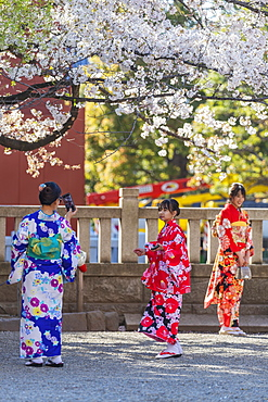 Women in kimonos, Sensoji Temple, Asakusa, Tokyo, Japan, Asia