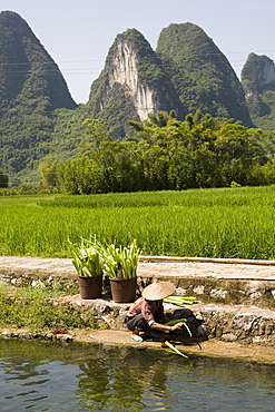 A local woman washing vegetables on Li River (Lijiang), Big banyan tree park, Yangshuo, Guilin, China