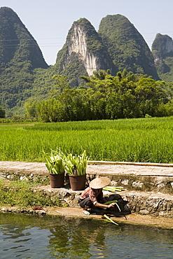 A local woman washing vegetables on Li River (Lijiang), Big banyan tree park, Yangshuo, Guilin, China
