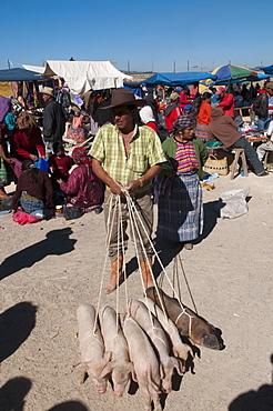 Animal market at San Francisco El Alto, Guatemala, Central America