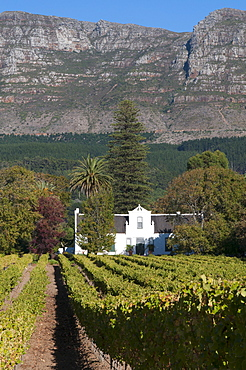Buitenverwachting Wine Farm, Constantia, Cape Province, South Africa, Africa