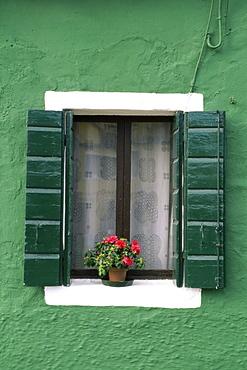 Flower pot on window sill, Burano, Venice, Veneto, Italy, Europe
