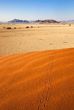 Animal tracks in sand, Namib desert, Namibia, Africa