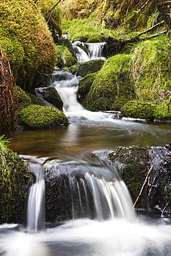 Stream in oak wood, Ariundle Woods National Nature Reserve, Strontian, Argyll, Scotland, United Kingdom, Europe