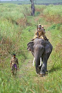 Game guards patrolling on elephant back, Kaziranga National Park, Assam state, India, Asia