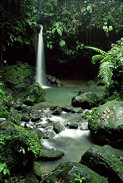 Waterfall flowing into the Emerald Pool, Dominica, West Indies, Central America