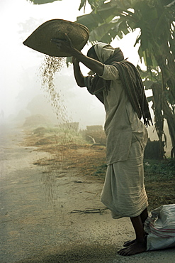Woman sifting grain, Vaishali, Bihar state, India, Asia