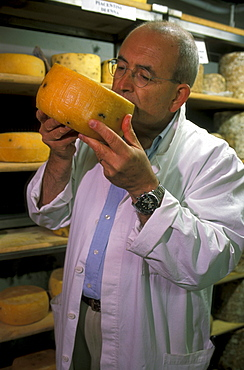 Carlo Fiori tasting cheese, Guffanti cheese dealer, Arona, Piedmont, Italy.