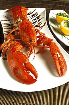 Lobster, Centrale restaurant, Venice, Veneto, Italy