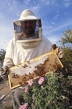 Maurizio Anichini beekeeper, Castello, Isola Del Giglio, Toscana, Tuscany, Italy