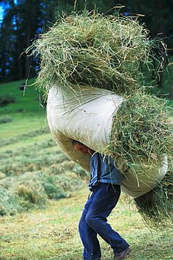 Hay harvesting, Alta Badia, Trentino Alto Adige, Italy