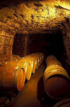 Wine cellar, Castellinaldo, Langhe, Piedmont, Italy.