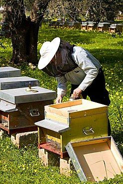 Ape Maya beekeeping, Mesagne, Puglia, Italy
