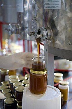 Honey, Ape Maya beekeeping, Mesagne, Puglia, Italy