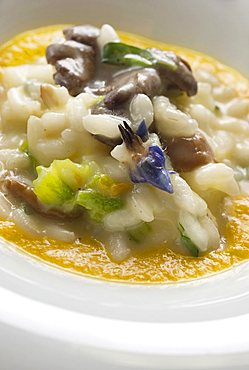 Risotto with mushrooms, pumpkin and its flower, Fabio Barbaglini chef, Italy, Europe