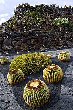 Cactus garden desgned by Cesar Manrique, Guatiza, Lanzarote, Canary Islands, Spain