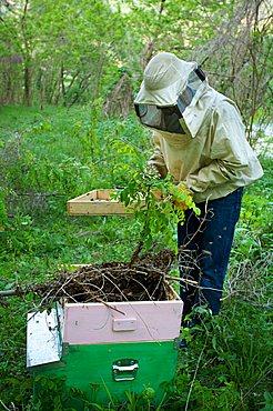 Beekeeper, Vallagarina, Trentino, Italy, Europe