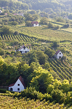 The vinyards of Szekszard. The Szekszard region is a small and famous wine-growing region in Hungary right at the edge of the hungarian plains and the river danube. Europe, Eastern Europe, Hungary, Szekszard