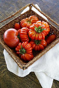 Organic fresh tomatoes, Umbria, Italy, Europe